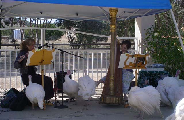 Laura Halladay and Stephanie Bennett perform for curious turkeys